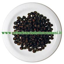 PIANTA OFFICINALE Ginepro bacche ( Juniperus communis) 100 grammi