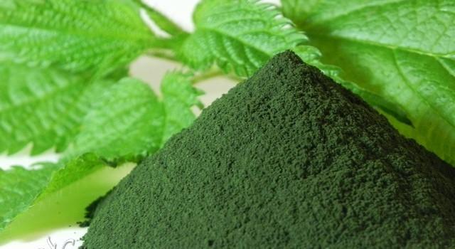 Risultati immagini per estratti verdi clorofilla